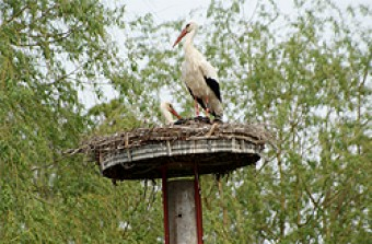 04_storch